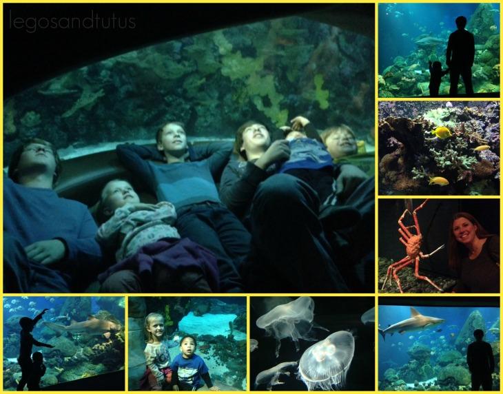 TN aquariumTrey'sphone
